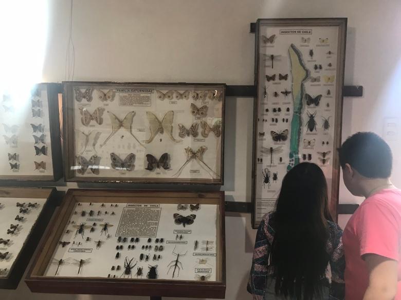 Museo Entomológico, Vicuña   Mi Blog de Aventuras   2018