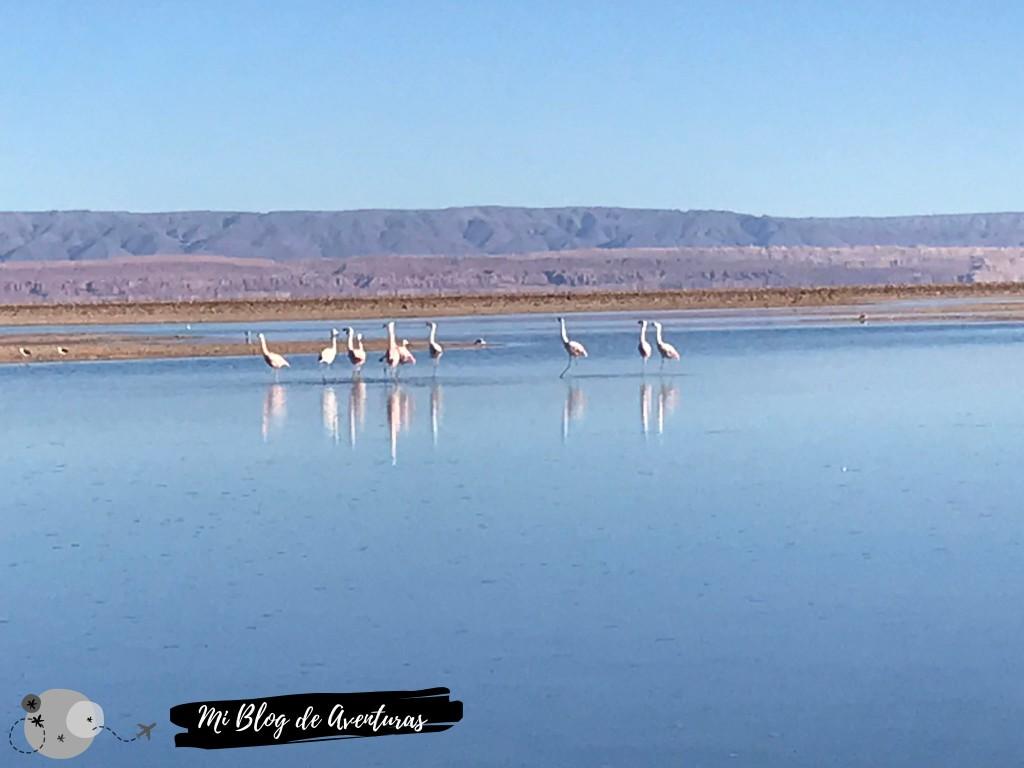 Laguna Chaxa, San Pedro de Atacama | Mi Blog de Aventuras | 2019